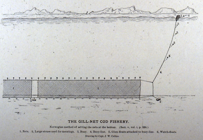 The gill net cod fishery penobscot bay history online for Gill net fishing