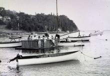 Andre the Seal
