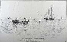 The Bank Trawl-Line Cod Fishery